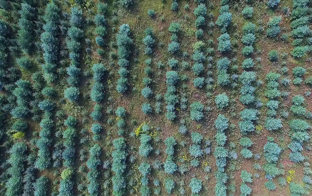 Drone Photography Markdale Tree Farm